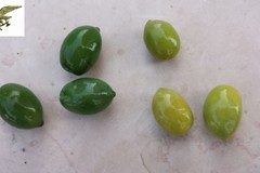 Olive da tavola colorate, sequestrati 10 mila chili di prodotto