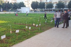 A Terlizzi un orto urbano per coltivare relazioni sociali?