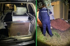 Furto di elettrodomestici a Corato: arrestati due romeni a Terlizzi