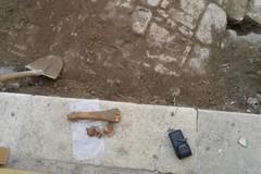 Un osso di mucca trovato in Largo lago dentro / FOTO