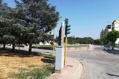 Rotatoria via Giovinazzo: allarme per i cedri