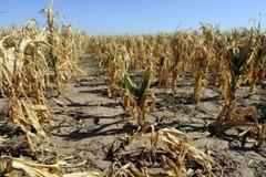 Coldiretti denuncia: «In tre giorni persi in Puglia 1,3 milioni di metri cubi d'acqua»