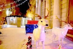 Le luci di Natale stanno arrivando, si comincia da piazza Cavour