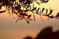 «Si finisce per morire da soli tra gli alberi»