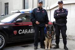 Attività antidroga presso gli istituti scolastici di Terlizzi da parte dei Carabinieri