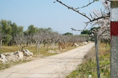Terlizzi in agricoltura: furti in campagna, la risposta del Consorzio