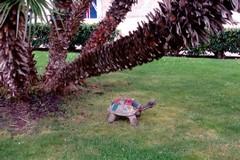 Che ci fa una tartaruga in piazza Cavour?