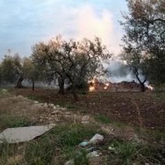 Incendi e siccità: l'allarme di Coldiretti