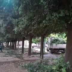 """Nuova  """"linfa """" per i giardini di Parco Marinelli"""