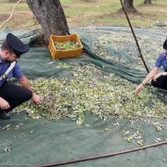 Confagricoltura Bari e Bat: aumentano i furti nelle campagne