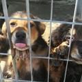 Morte cuccioli nel canile, Tempesta: «Vicenda isolata e già conclusa»