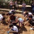 I bambini della scuola Arcobaleno donano una piantina al parco comunale