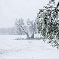Neve su Terlizzi, confermata l'allerta meteo