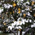 Emergenza neve, ora si passa alla conta dei danni in agricoltura