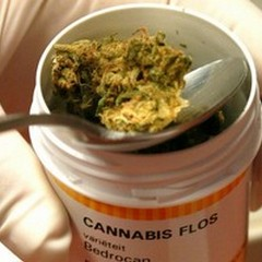 Cannabis terapeutica per una donna di Gravina affetta da sclerosi multipla