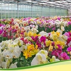 Le aziende dei fiori esporranno alla Fiera di Milano Rho