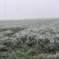Venti forti settentrionali e temperature in calo: arriva il freddo su Terlizzi