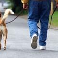 Multe fino a 500 euro per chi porta a spasso il cane oltre i 200 metri dal domicilio