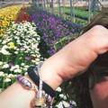 """Florovivaismo:  """"riapre """" la vendita di fiori e piante. Ma i problemi restano"""