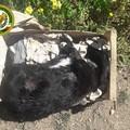 Cani morti abbandonati tra i rifiuti