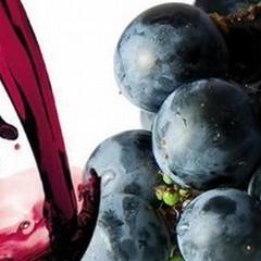 San Martino: ogni mosto è vino