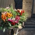 Florivivaismo, a rischio chiusura molte aziende (FOTO)