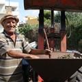 Raccolta delle mandorle, viaggio nelle campagne terlizzesi
