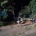 Grosso albero sulla sede stradale: lievi danni ad un'auto di passaggio