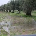 Maltempo in tutta la regione ed a Terlizzi: l'allarme di Coldiretti Puglia