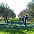 Elezioni europee: CIA Puglia chiede la massima attenzione per gli agricoltori pugliesi