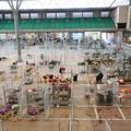 Mercato dei fiori: le contrattazioni riprendono all'interno del plateatico (FOTO)