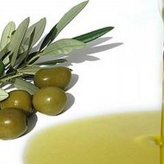 Olio di olivo, a terlizzi prezzi di 30-40 euro a quintale superiori al mercato