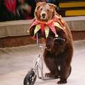 Circo, no agli spettacoli con gli animali a Terlizzi