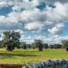 Campagna viticola e olivicola 2015, si deciderà tutto nei prossimi dieci giorni
