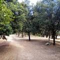L'Amministrazione punta a valorizzare l'area della collinetta del Parco comunale