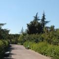 Riapre il Parco comunale di Terlizzi