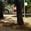 Parco Marinelli chiuso: c'è pericolo di caduta alberi