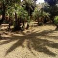 """Sistemato il Parco Marinelli """" dopo l'appello di alcune mamme al sindaco Gemmato"""