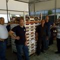 Mercato di Terlizzi snodo per la vendita di cieligie