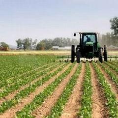 Scade domani l'ultimo termine per pagare l'Imu agricola