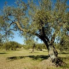 Piano di Azione Locale 2014-2020, cresce il Gal Fior d'Olivi