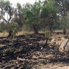 Incendi sulla Via Appia, in Zona Portoni