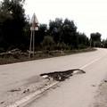 """Un  """"cratere """" in mezzo alla provinciale Terlizzi-Giovinazzo"""