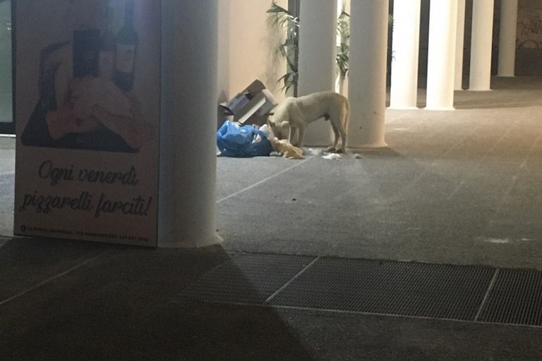 cane e rifiuti