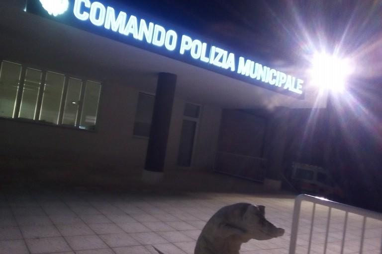 Comando polizia locale. <span>Foto Cosma Cacciapaglia</span>