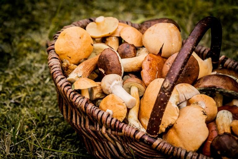 Un cesto di funghi