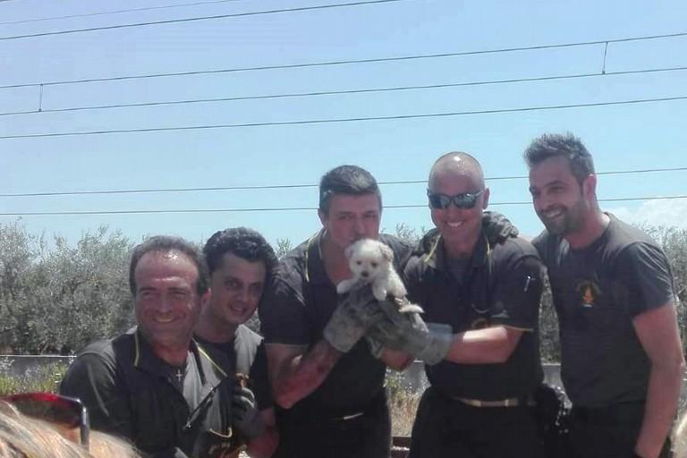 Il cucciolo Fire salvato dai Vigili del Fuoco. Il video che ha commosso il web
