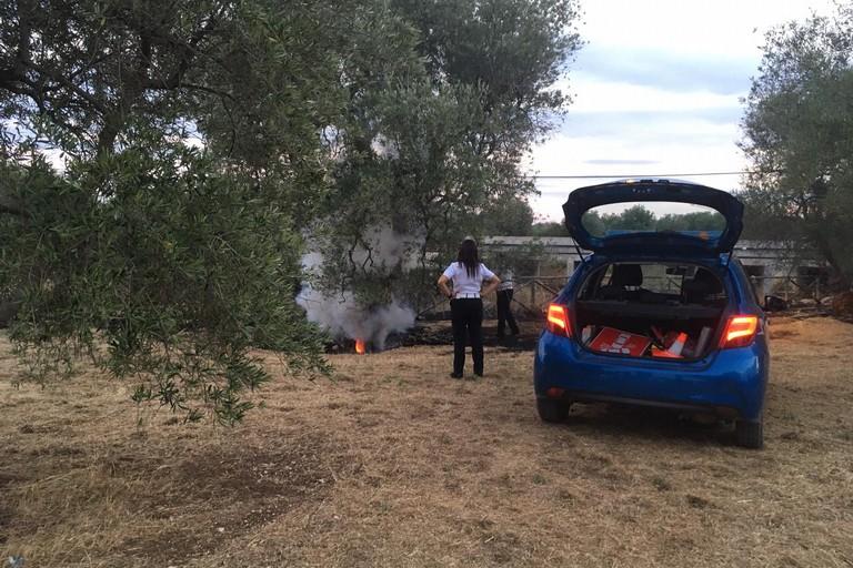 Ulivo in fiamme. <span>Foto Vincenza Urbano</span>