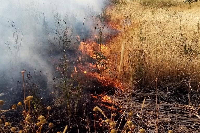 Incendio sterpaglie. <span>Foto Cosma Cacciapaglia</span>