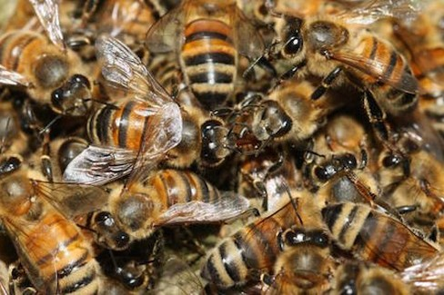 Terlizzi allarme nidi d 39 api segnalati sciami in via piscina nuova e viale delle mimose foto - Nido api finestra ...